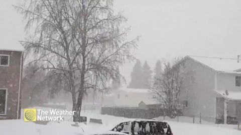 Large snowflakes fall in Northeastern British Columbia