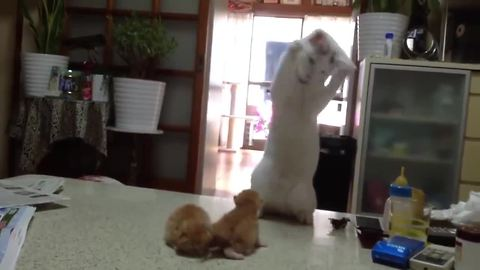 Mother cat hilariously entertains her kittens
