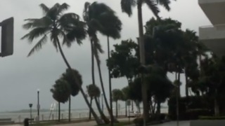 Strong Winds in Miami Caused by Outer Bands of Approaching Hurricane Irma - Video