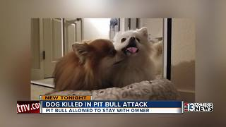 Las Vegas woman upset killer dog left with owner - Video