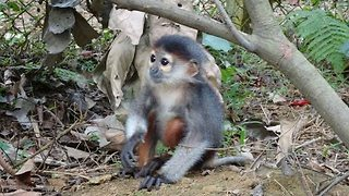 Colorful Baby Monkey Learns How to Jump - Video
