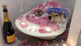 Couple goals: Adorable video of dog and cat sharing bath together - Video
