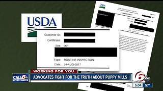 Advocates fight for truth about puppy mills - Video