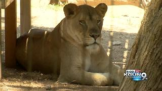 Tucson voters approve sales tax to improve Reid Park Zoo - Video