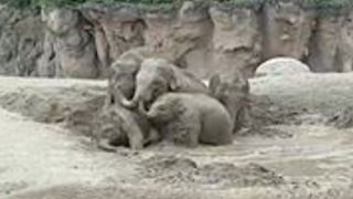 Elephants at Dublin Zoo Get Ready to Beat the Heat With a Pool Party - Video