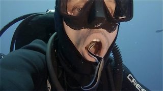 Fishy dentist – Cleaner fish swim inside diver's mouth - Video