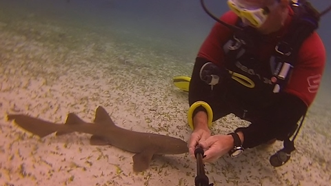 This Baby Nurse Shark Is Very Curious About A Diver. Its Next Move Will Make You Smile.