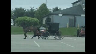 Goose Pesters Amish Man's Horse in Home Depot Parking Lot