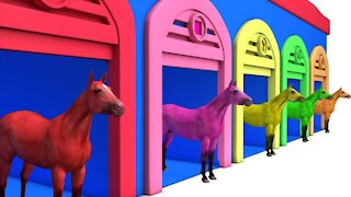 Learn Color Learn Shapes Horse W Learn Animals Cartoon Nursery Rhymes for Children