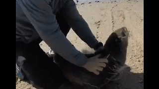 Seal Freed From Fishing Line Returns to the Ocean