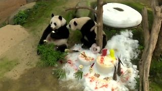 Pandas celebrate their birthday in Malaysia - Video