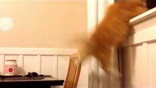 Clumsy Cat Fails Miserably at Risky Leap of Faith - Video