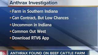 Anthrax found on beef cattle farm