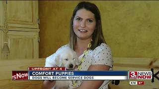Omaha couple breeds puppies with a purpose - Video