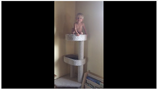 Fearless Baby Girl Exhibits Impressive Climbing Skills - Video