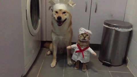 Shiba Inu teams up with cat to cook tasty meal