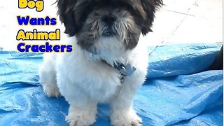 Dog Goes Crackers For Food - Video