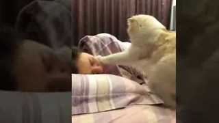 This Cat Makes the Perfect Alarm Clock - Video