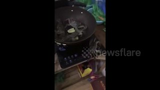 Escape claws: Crab turns off cooker to rescue friends - Video