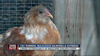CDC: Salmonella infections linked to 'Backyard Flocks' of chickens - Video