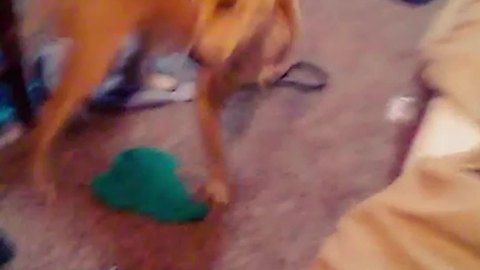 Dog Gets A Little Too Excited Playing Fetch