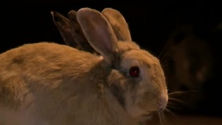 Hundreds of bunnies outside valley business - Video