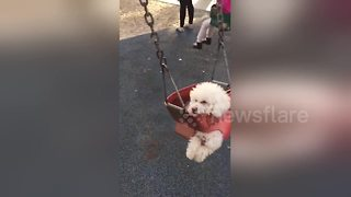 Cute dog enjoys ride on park swing - Video