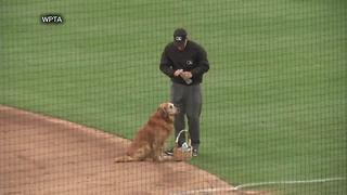 Jake the Diamond Dog delivers water to baseball umpires - Video