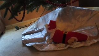 Bearded Dragon models homemade Santa Claus outfit - Video