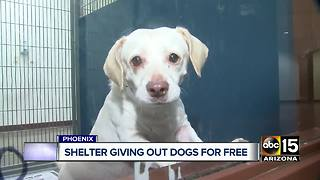 Free dog adoptions in Maricopa County - Video