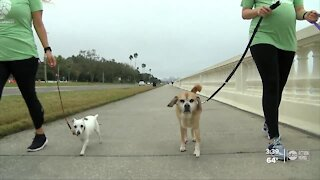Dog walking business rebounds thanks to clients