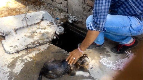 Happy trail: Adorable puppy rescued by alert Samaritan after falling into an underground water tank