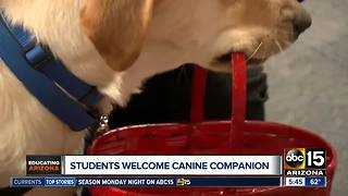 Arizona students welcome canine to classroom - Video