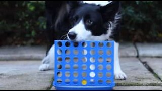 Dog plays Connect Four like a boss