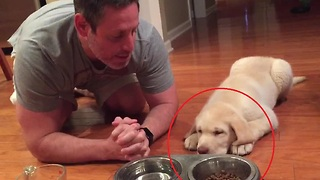 Puppy Has The Cutest Ritual Before Eating Dinner - Video