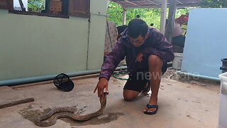 Talented snake charmer brings wild cobra under control with his bare hands