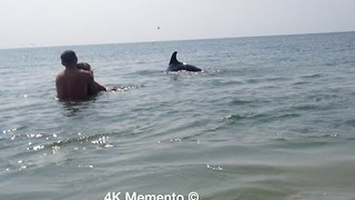 Friendly Dolphins Swim and Play Beside Humans at Ukrainian Beach - Video