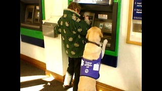 Dog Gets Money From ATM - Video