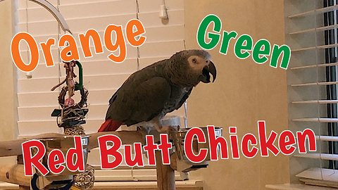 Inventive parrot describes chicken three different ways