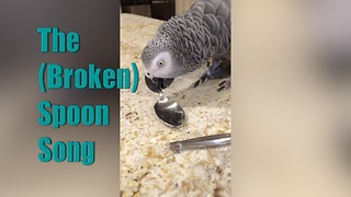 Einstein Parrot's Broken Spoon Song - Video