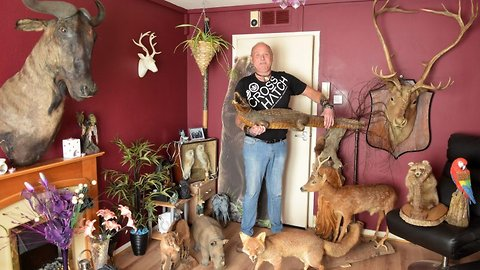Animal lover with no room for real pets fills tiny one bed flat with taxidermy, resin and cardboard cutout creatures