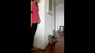 Cat literally jumps in excitement during hide-and-seek with owner