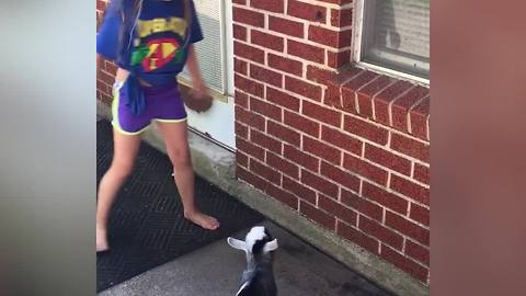A Young Girl And A Baby Goat Run Against A Small Brick Wall