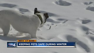Remember to protect your pets this winter