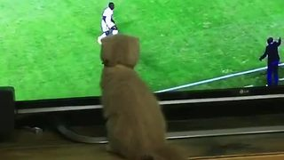 Soccer-loving kitten gets in on the action - Video