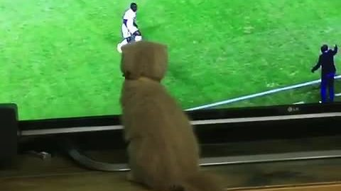Soccer-loving kitten gets in on the action
