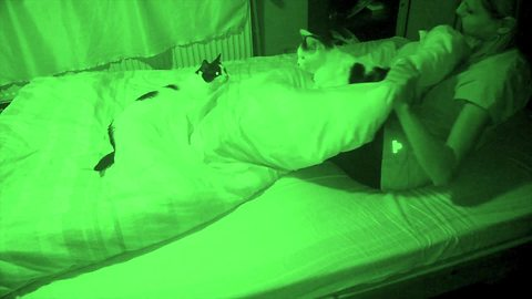 Lively Cats Play In Bed While Owner Is Sleeping