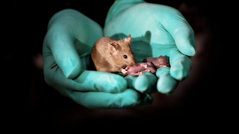 Same-Sex Mice Give Birth Thanks To Gene Editing