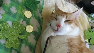 Cat Goes On Catnip Bender To Celebrate St. Patrick's Day - Video