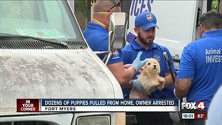 Dozens of puppies rescued from filthy home
